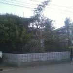 本巣市 庭木の剪定・伐採