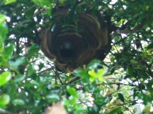ハチの巣 退治