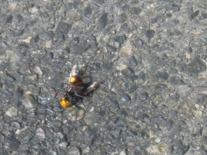 スズメバチ 退治