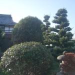 岐阜市 庭木の剪定