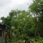 庭木 伐採