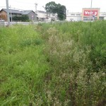 羽島市 草刈り