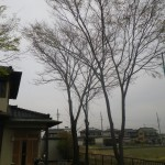 一宮市 庭木の伐採作業