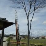 一宮市 庭木伐採作業