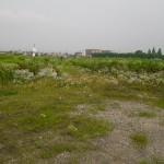 大垣市 草刈り