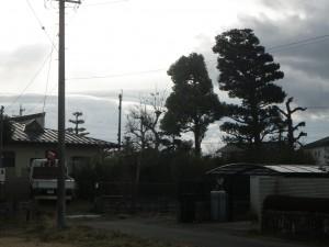 羽島市 剪定