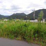 岐阜市日野 草刈り作業